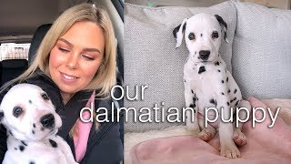 Getting Our Dalmatian Puppy 🐶🐾🎀