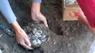 preview picture of video 'Археологические раскопки в Сайраме, нашли серебрянные монеты'
