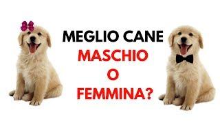 E' meglio il cane maschio o il cane femmina?: pro e contro per scegliere se prendere m o f!