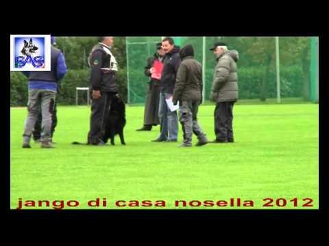 Preview video  Jango di casa Nosella Campionato di addestramento 2012