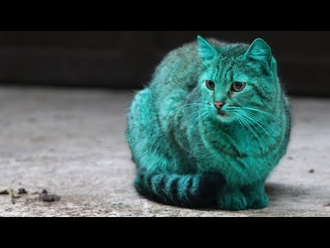 Bulgaria's Mystery Emerald Green Cat