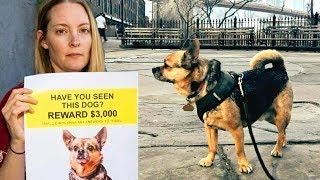 Она повсюду искала украденного пса, а тут его преспокойно ведут по улице чужие люди!