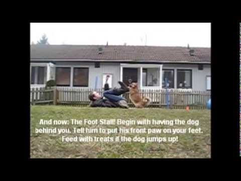 How to teach your dog the Sit Pretty Foot stall!