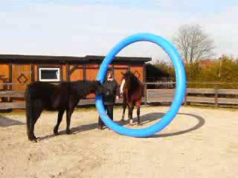 Pferde im Schwimmring