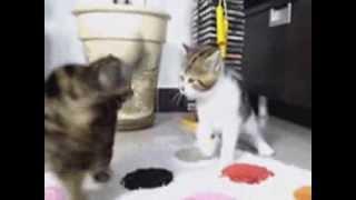 Brutal cat figth