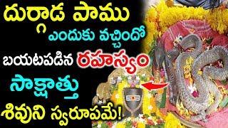 దుర్గాడపాము సాక్షాత్తు ఆ శివుని స్వరూపమే! | Durgada Snake Real Story | Shiva Lingam | PlayEven