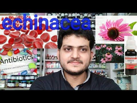 Echinacea ! Homeopathic medicine echinacea ?? antibiotic ??