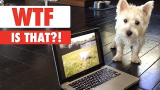 WTF IS THAT?!   Confused Pets Compilation