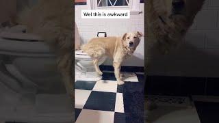 animales el perro entrenado en el baño