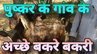 PUSHKAR - मुफ्त ऑनलाइन वीडियो