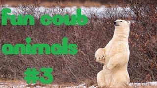 FUN coub animals #3 \ смешные животные\ приколы ноябрь 2018