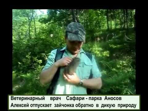 В Приморском Сафари-парке выпустили в лес зайчонка - Приморский Сафари Парк