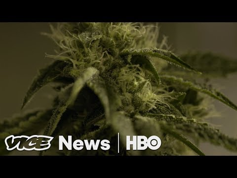 Will California Weed Growers Survive Legal Marijuana? Vice News