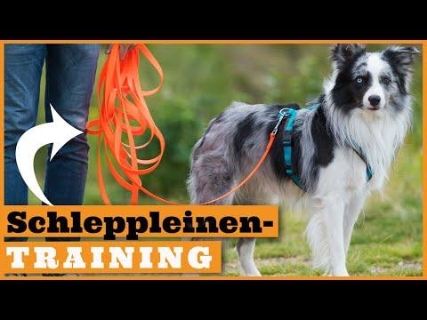 So nutzt du die Schleppleine für den Freilauf mit Hund I Richtig trainieren mit der Schleppleine