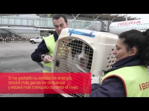 Cómo viajar con tu mascota