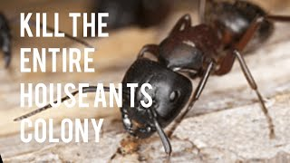 How to Kill the Whole Entire House Ant Colony