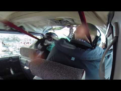 Pájaro se estrella contra un aeroplano