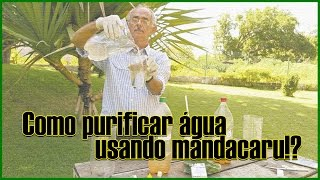 Técnica inovadora ensina como limpar água usando Mandacaru