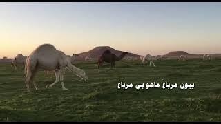شيلة البدو ياسالم - كلمات منصور سالم المرزوقي - اداء سعدون فيصل حصرياُ تحميل MP3