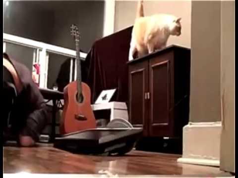 Con mèo mất dạy