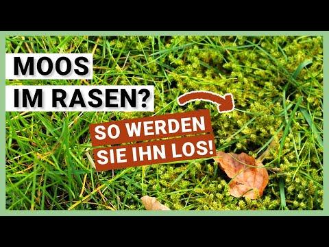 Moos im Rasen - So entfernen Sie Moos richtig (praktische Tipps)