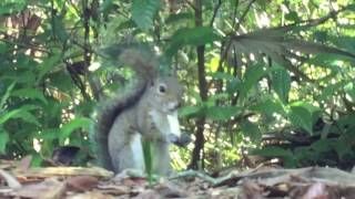 The Story Of A Squirrel Who Was Special