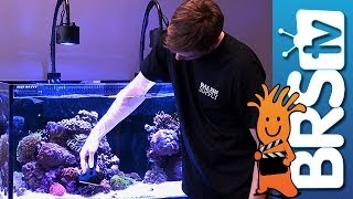 Keeping Your Aquarium Glass Clean - EP 3: Saltwater Aquarium Maintenance
