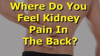 Where Do You Feel Kidney Pain In The Back?