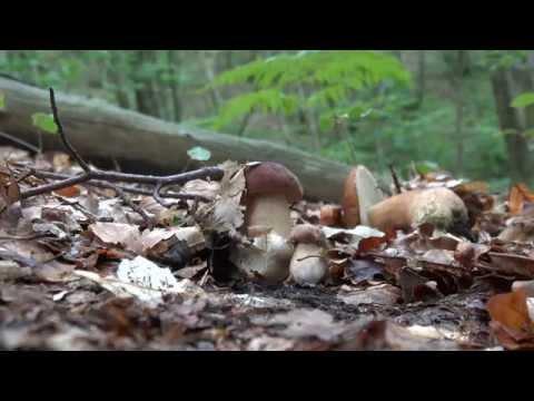 Composizione di olio di piedi un bene da un fungo di unghie