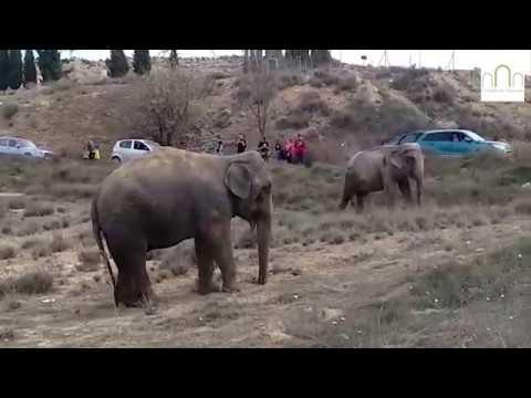 Elefant bei Verkehrsunfall getötet