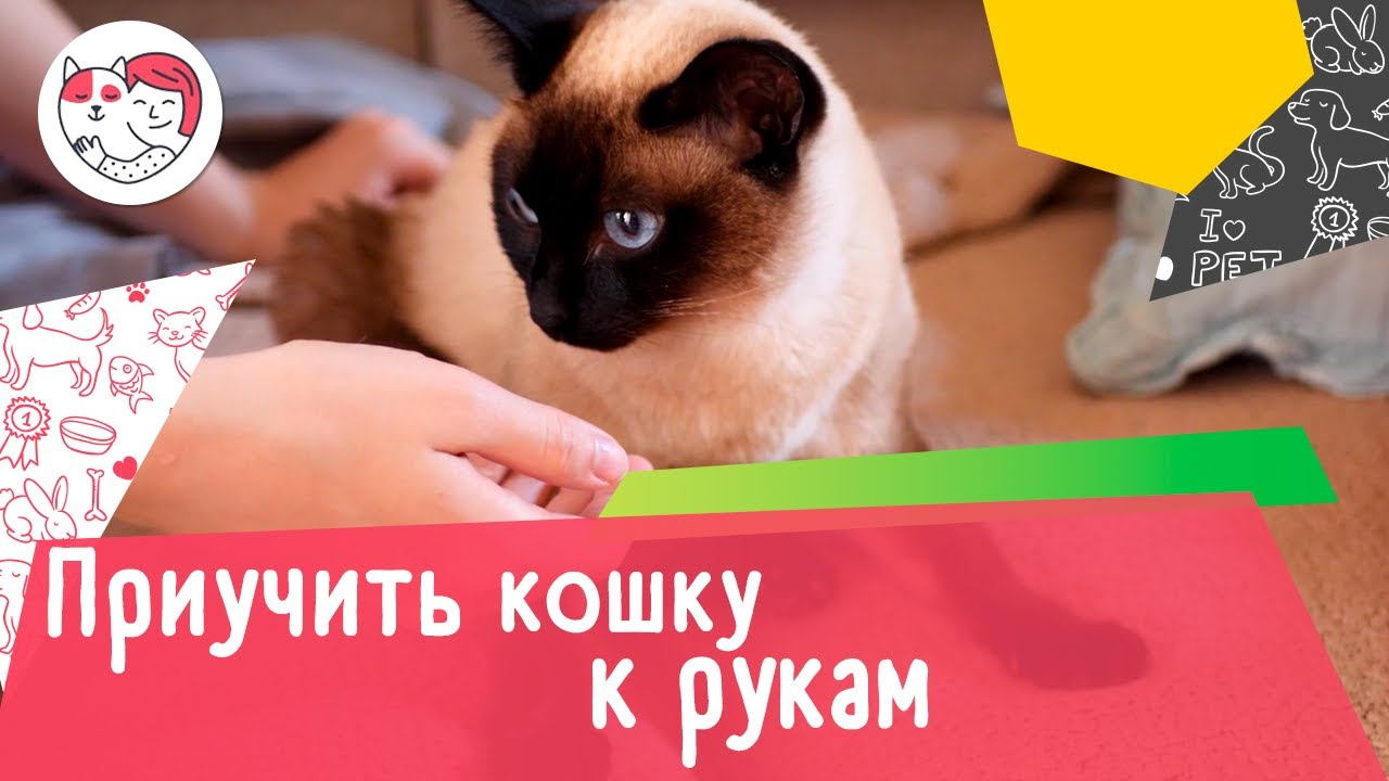 Как приучить кошку к рукам: 5 советов