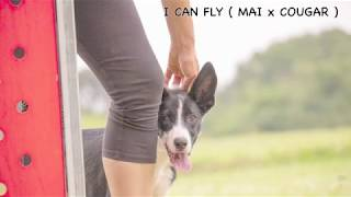 I CAN FLY ( MAI DIRE MAI X MY COUGAR )  twist & back sul'anta first time