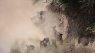 Masai Mara river crossing
