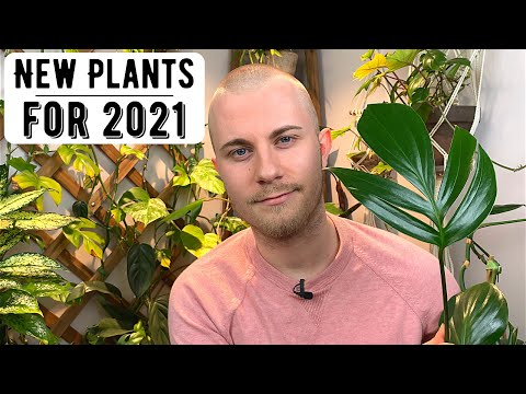 , title : 'New Houseplants For 2021