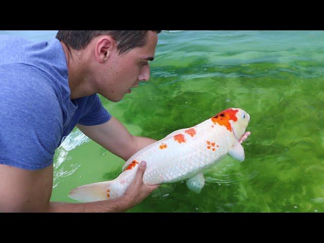 I BOUGHT MY DREAM FISH $5000