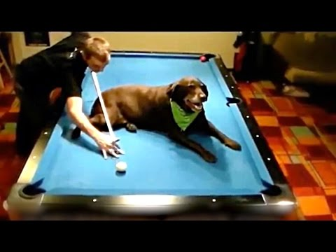 BEST POOL TRICK SHOTS!  | PEOPLE ARE AWESOME 2017