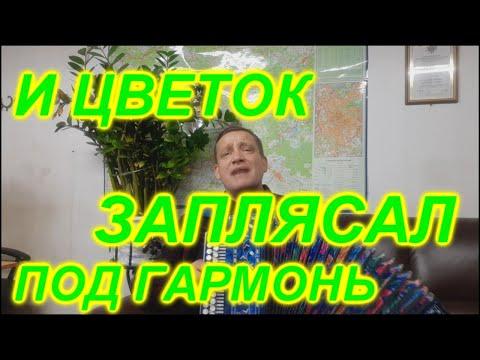 НЕ ЛОМАЙ ЧЕРЕМУХУ! Гармонист Иван Киселёв!