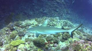 preview picture of video 'Shark diving in Mauritius with Just Diving'