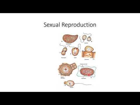 Candidiasis nemi szemölcsök nőknél tünetek