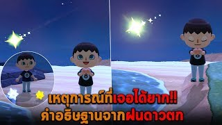 เหตุการณ์ที่เจอได้ยาก คำอธิษฐานจากฝนดาวตก Animal Crossing