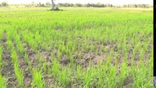 preview picture of video 'Episode 105 Agricultural Development in Ogun State'
