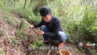 小伙用葫芦做出一个盆栽,有没有认识这个树的!