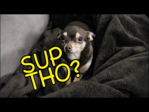 MY F#%!*NG DOG TALKS!