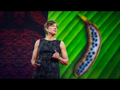 TEDx Pamela Ronald: The case for engineering our food