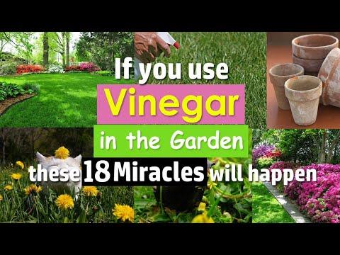 , title : 'If you use Vinegar in the Garden these 18 Miracles will happen