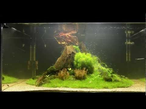 Aquascape Tutorial