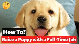 How to raise a puppy if you work a Full-Time Job? (Ninja Dog Care Tips and Tricks)