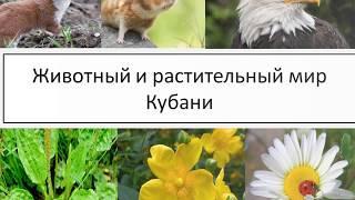 Животный и растительный мир Кубани