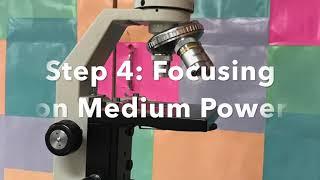 How to Focus a Specimen