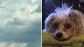 Hours After Dog Passes Away, Woman Looks at Clouds and Sees Pet's Face